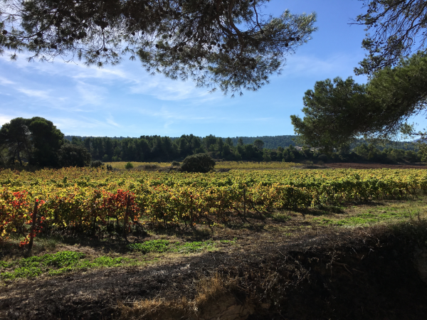 languedoc-weinberge