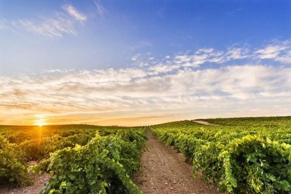 vineyards-finca-la-estacada